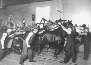 "Metal rods called ""spiders"" dropped the harnesses onto the horses backs."